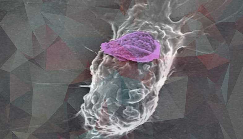 """Backpacks"" Boost Immune Cells Are Capable Of Fighting With Cancer"