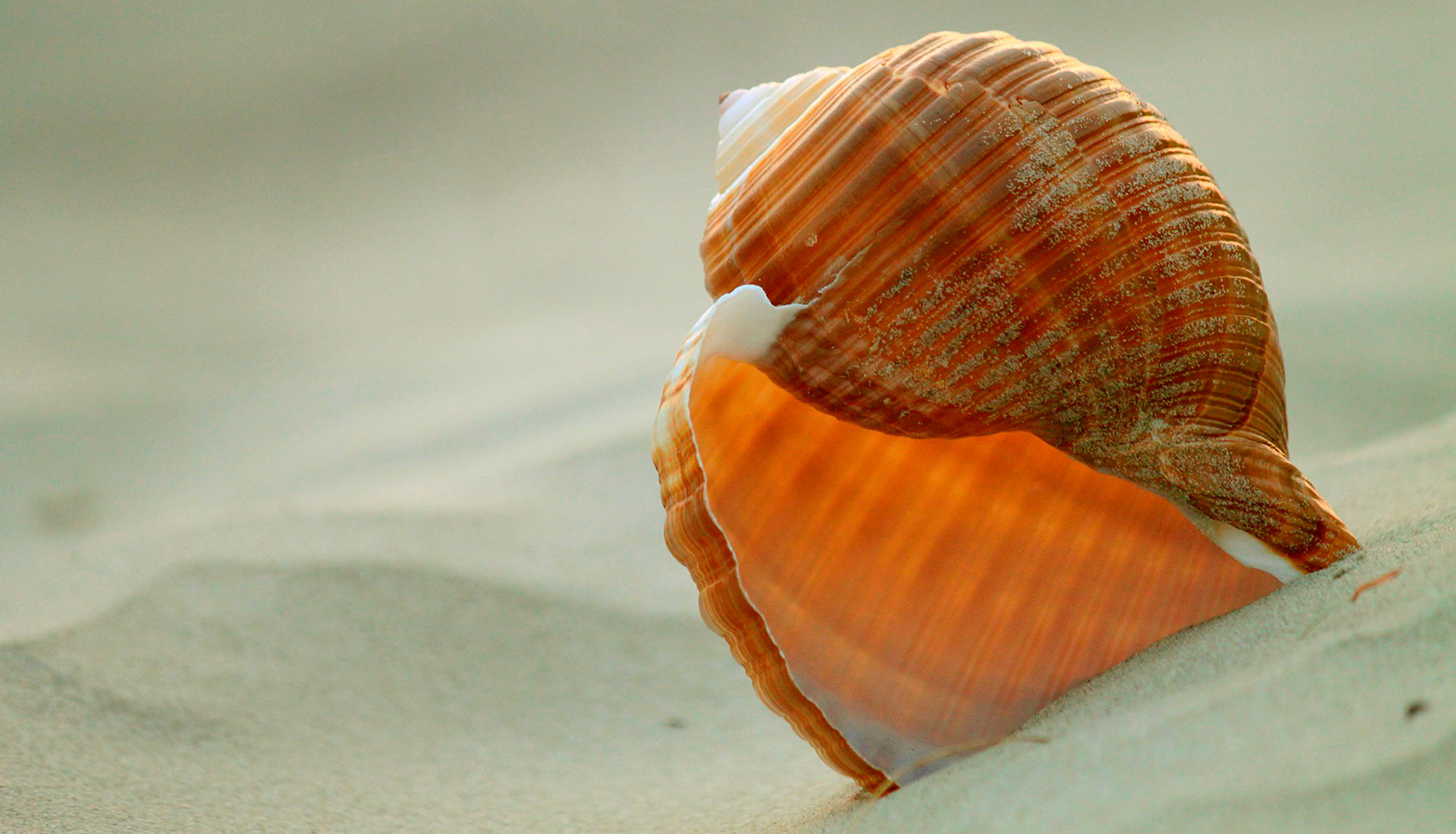 "Sea Snail Shells Have Inspired Scientists To ""Unbreakable"" Material"