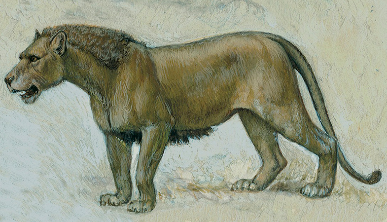 The Lair Of A Cave Lion At Least 12 Thousand Years Old Discovered In The Ural Cave